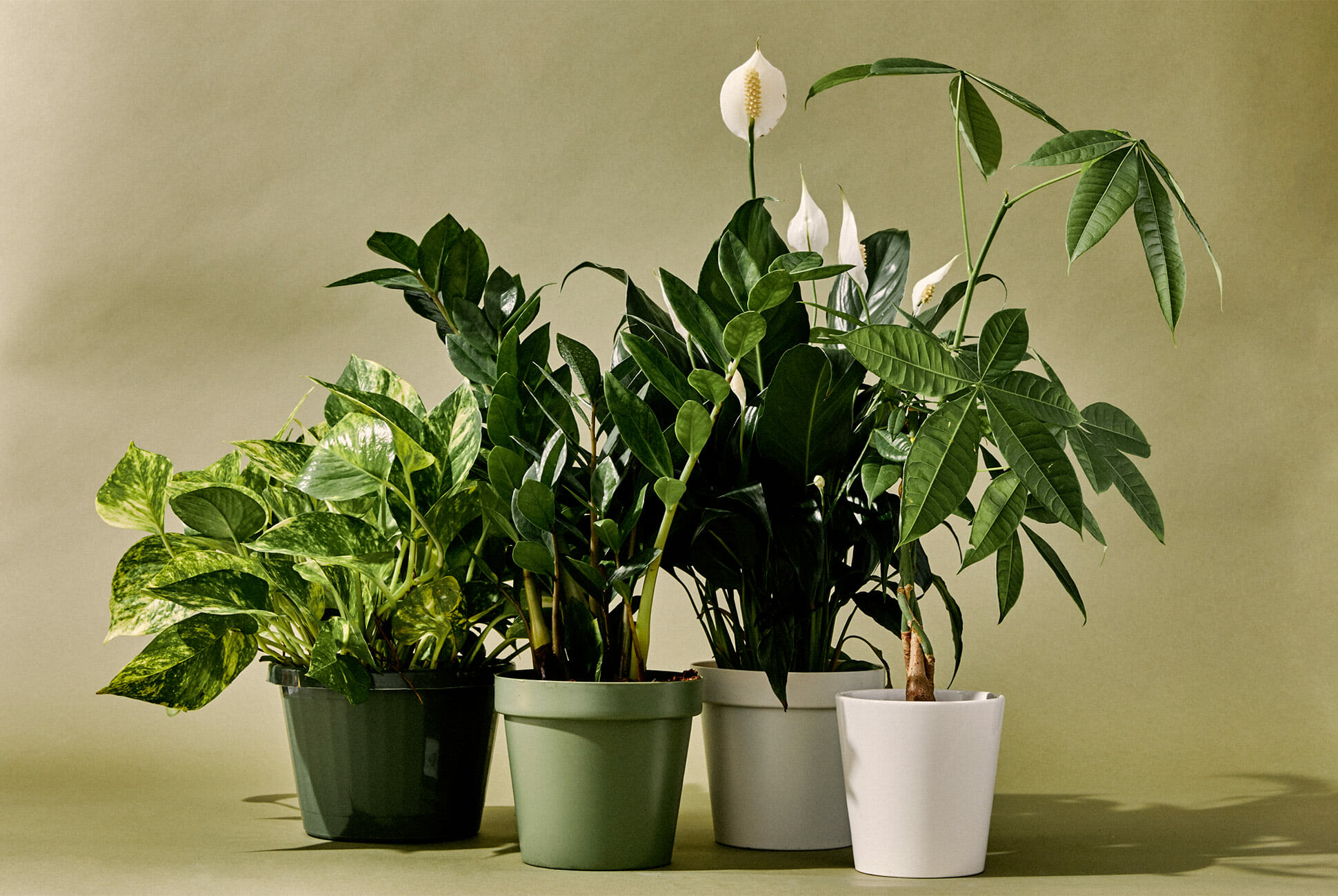 10-Best-Indoor-Plants-Gear-Patrol-lead-full
