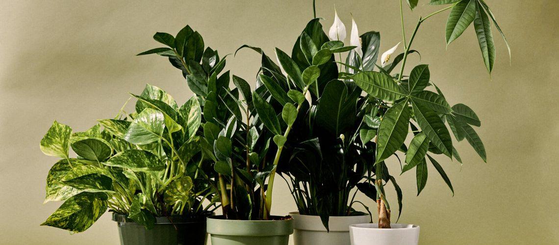 10-Best-Indoor-Plants-Gear-Patrol-lead-full